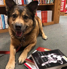 Most Dog Friendly Stores in America - Half Price Books