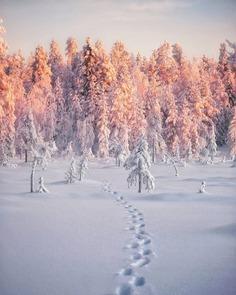 Mesmerizing Winter Wonderland Photos of Lapland in Finland