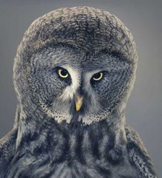 More Than Human by Tim Flach #inspiration #photography #animal