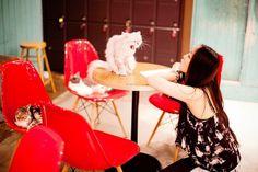 PARK & CUBE » Catnapper #in #cafe #seoul #cat