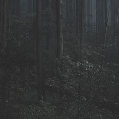 FFFFOUND! | trust_no1 #forest #photography #dark #leaves