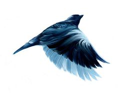 1 #s #illustration #adam #doyle