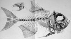 tumblr_lk5jo8KJxb1qgzqeto1_500.jpg (JPEG Image, 500x275 pixels) #illustration #fish #bones