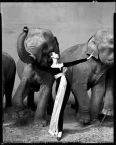 004kctk3.jpeg (JPEG Image, 514x640 pixels) - Scaled (85%) #white #girl #richard #black #avedon #elefants #photography #and