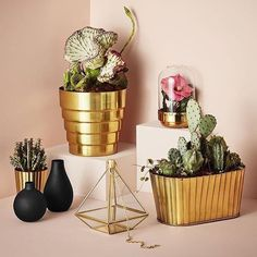 #pots #plants #golden #plants
