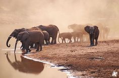 Wildlife Photography by Joshua Cripps » Creative Photography Blog #inspiration #wildlife #photography