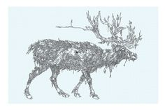 Caribou drawing from 2010 #illustration #caribou