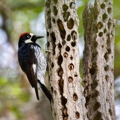 #kings_birds: Wonderful Bird Photography by Liron Gertsman