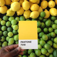 Pantone 7548 por Paul Octavius #lemons #card #yellow #color #palette #photography #pantone