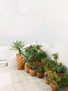 Rooftop container garden. Tangier Properties. © Salva López. #roofterrace #containergarden