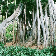 Jungle #photo #art #jungle