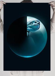 #moon #moonfish #sea