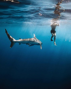 Stunning Underwater and Ocean Photography by Benjamin T. Ono