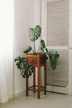 #monstera #monsteradeliciosa #plant #indoorplant