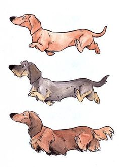 Dackels by Henrieke #illustration #dog