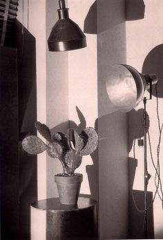 Google Image Result for http://www.escapeintolife.com/wp-content/uploads/2010/10/Cactus-and-the-Photographers-Lamp2-Charles-Sheeler-698x1024 #charles #cactus #sheeler