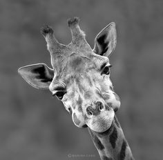 Splendid Wild Animals Photos by Marina Cano #photography #animal