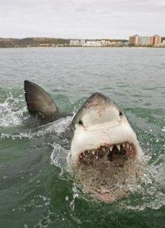 EIKNARF #shark