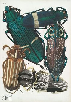 weetstraw.com - Insect Collages #insects #beetle