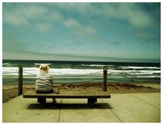 Ocean by Lea by ~lassekorsgaard on deviantART #calm #bench #pacific