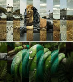 wdcUK.jpg (JPEG Image, 500×563 pixels) #collage #snake #lion