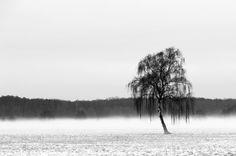 Cromoart dp_coldness 1 #minimal