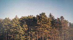 //// #forest #photography #landscape