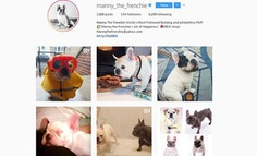 @Manny_the_Frenchie - Manny The Frenchie World's Most Followed Bulldog and philanthro-PUP!