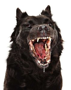 Art & Photography: Evan Kafka | Feature Shoot #dog #wolf