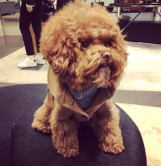 Most Dog Friendly Stores in America - Coach Leather
