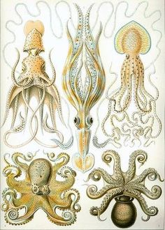 Ernst Haeckel - Artforms of Nature - Kunstformen der Natur #drawings #vintage