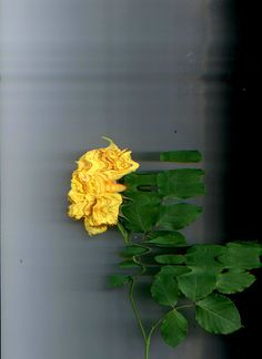 Untitled #epok #experimental #nature #flower #scan
