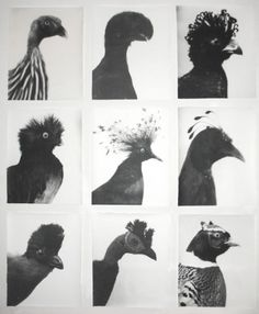 VVORK #grid #birds #typology