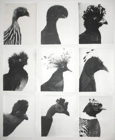 VVORK #grid #birds #typology