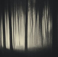 50,000 Miles Beneath My Brain by ~JonhyBlaze on deviantART #photography #forest #nature #tree