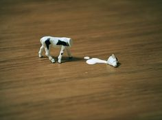 Make Something Cool Every Day 2009 on the Behance Network #milk #miniature #cow