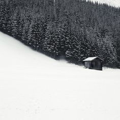 White #hut #snow #photography #minimal #forest #trees