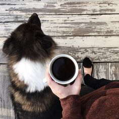 Dog #coffee #dog