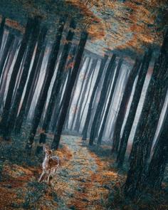 Digital Wonderland: Dreamlike Photo Manipulations by Diogo Sampaio