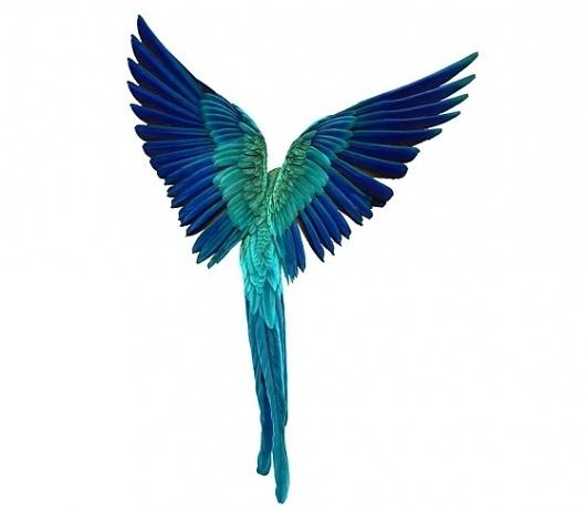 Andrew Zuckerman 'Bird' Series   Trendland: Fashion Blog & Trend Magazine #zuckerman #andrew