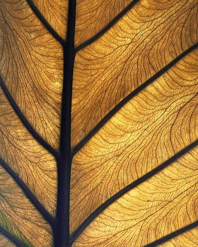. #photo #nature #gold #leaf