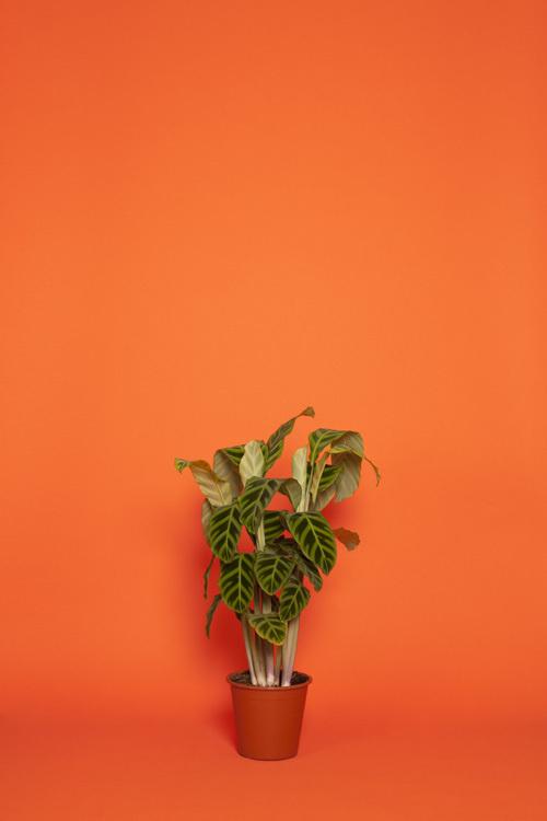 1 #plant