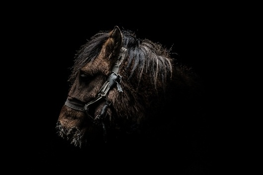 Gods and Beasts on the Behance Network #mongolia #photography #horse