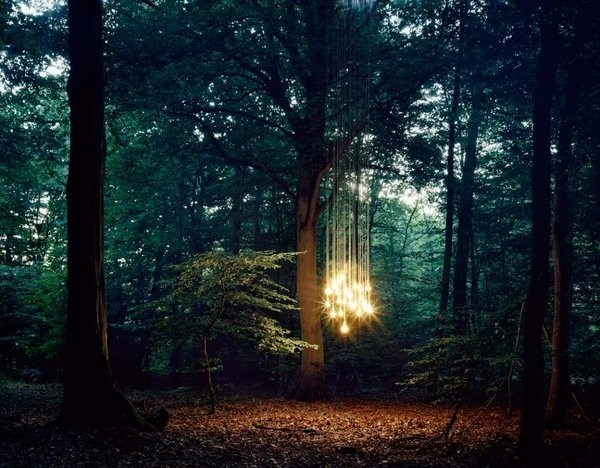 bulbs F.jpg (1152×900) #lottie #lights #illuminated #sparkly #forest #light #davies