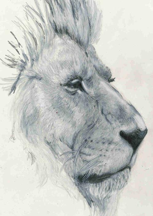 Junk Funk #lion #drawing #illustration #study #pencil #sketch