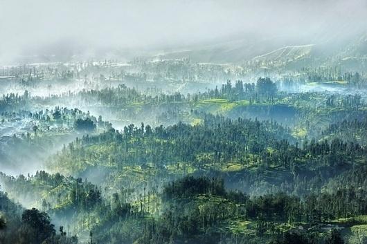 Arnov-Setyanto3.jpeg 600×400 pixels #nature