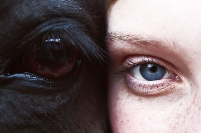 thebeautyoficeland-8 #eyes #photo #horse #freckles