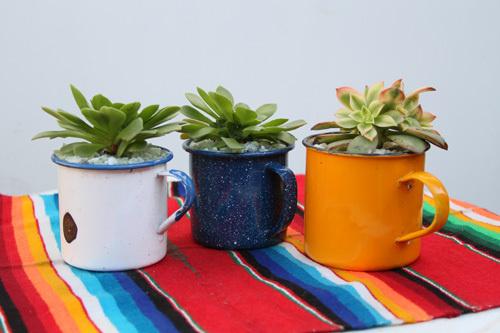 tin cup succulents #succulents