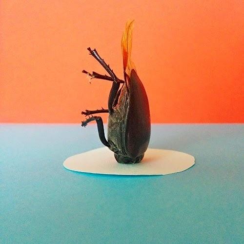 Specialmagazin #stag-beetle #photo #bug #orange #halfbug #horn #animal