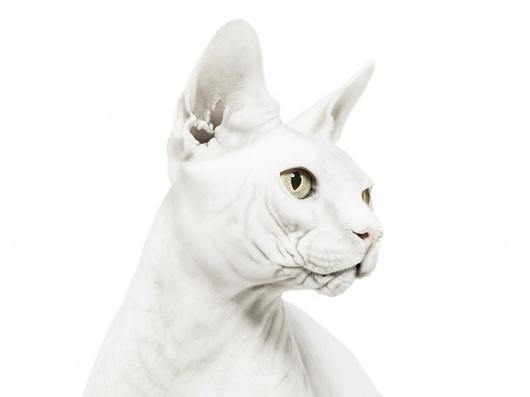 andrew-zuckerman-creature-1.jpg (JPEG Image, 640x480 pixels) #photography #cat #zuckerman